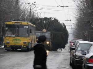 В Черновцы доставили главную елку города. Фото и видео